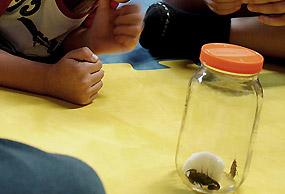 Crianças observam escorpião no Instituto Butantan