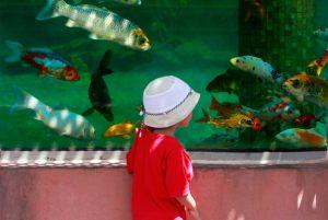 Criança visita aquário - Shutterstock